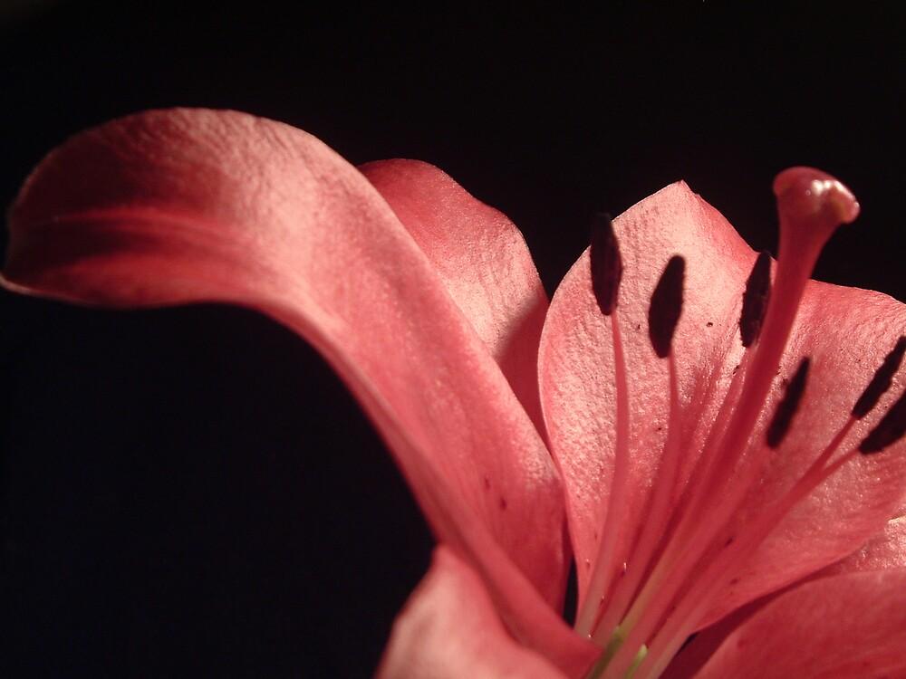 Hot Pink by Angela Barnard