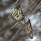 butterfly duet by Janine Paris
