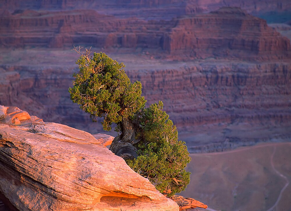 Lone Tree by Steve  Taylor