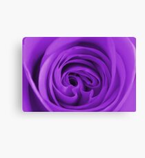 Beautiful Vibrant Purple Rose Canvas Print
