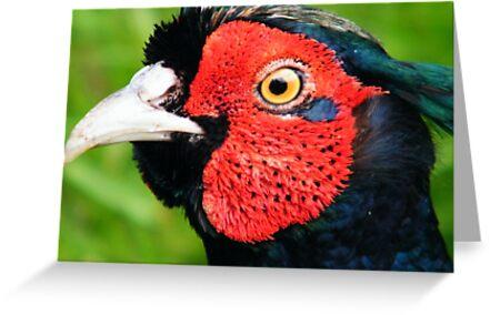 A Pheasant's Portrait by Laura Kelk