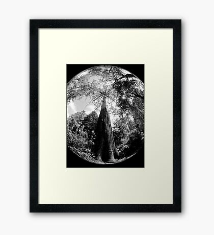 Standing Tall... Framed Print