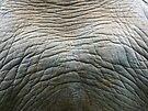 Rhino Hide by Laura Kelk
