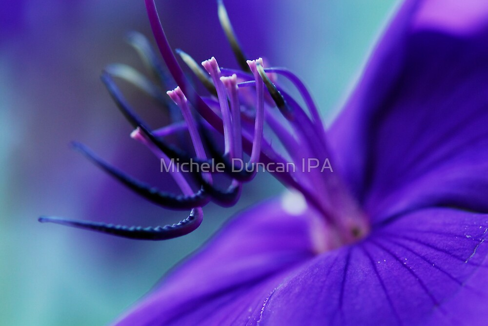 At The Heart of It by Michele Duncan IPA