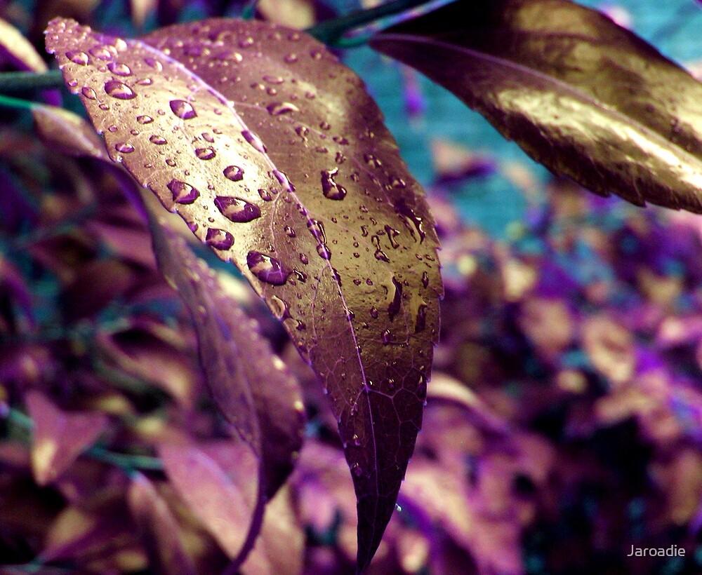 Abstract Leaf by Jaroadie