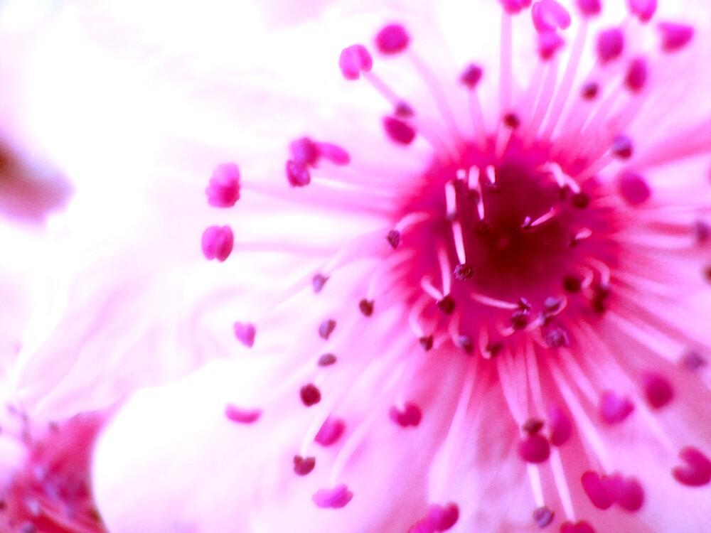 pink fushia by SherryAnn