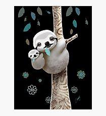 Baby Sloth Midnight Photographic Print