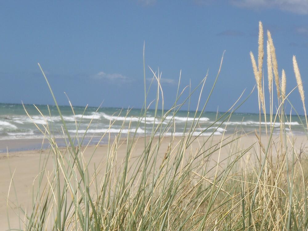 pampas grass barrier  -  -  sunny beach day - at Somerset beach by gaylene