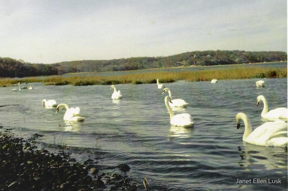 Swans by Janet Ellen Lusk