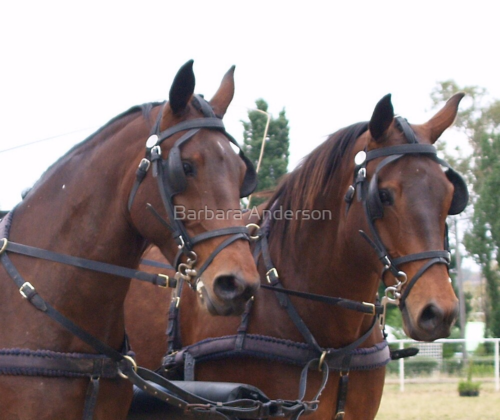 Harness Horses by Barbara Anderson