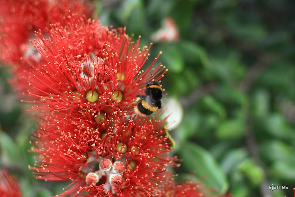 Bee #2 by sjames