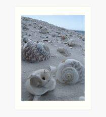 Shell Seeker Art Print