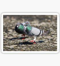 Iridescent feathers Sticker