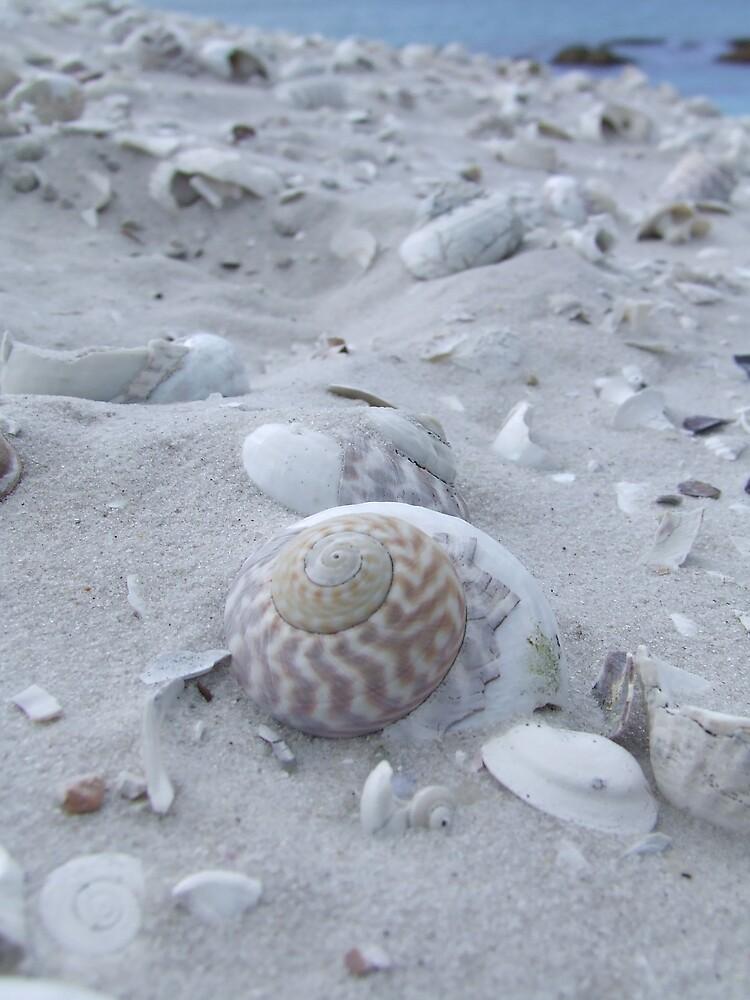 Shell Treasure by Samara  Lee