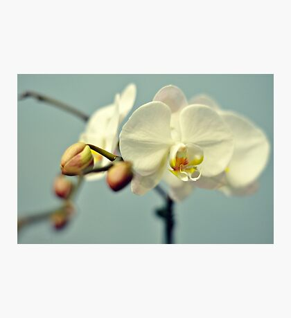 Vanilla Orchid Photographic Print