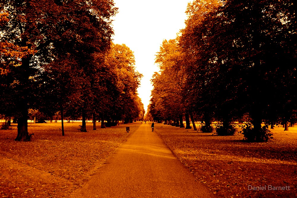 Hyde Park, London by Daniel Barnett