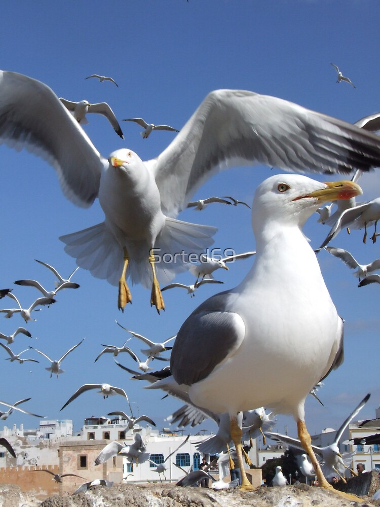 See Gull by Sorted69