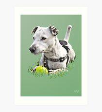 Jack : Jack Russel Terrier x Staffy Art Print