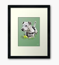 Jack : Jack Russel Terrier x Staffy Framed Print