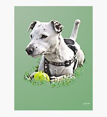 Jack : Jack Russel Terrier x Staffy Photographic Print