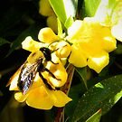 Bumble and Blooms by debidabble