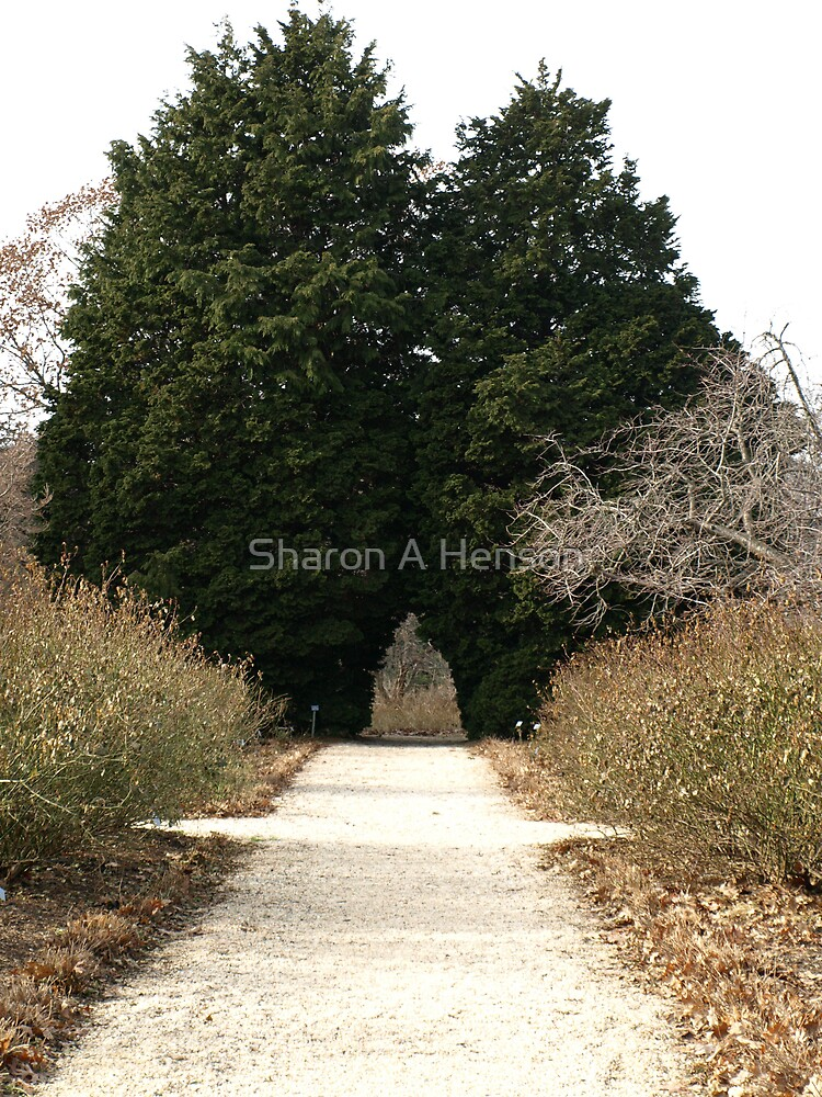 THE ARCH WAY by Sharon A. Henson
