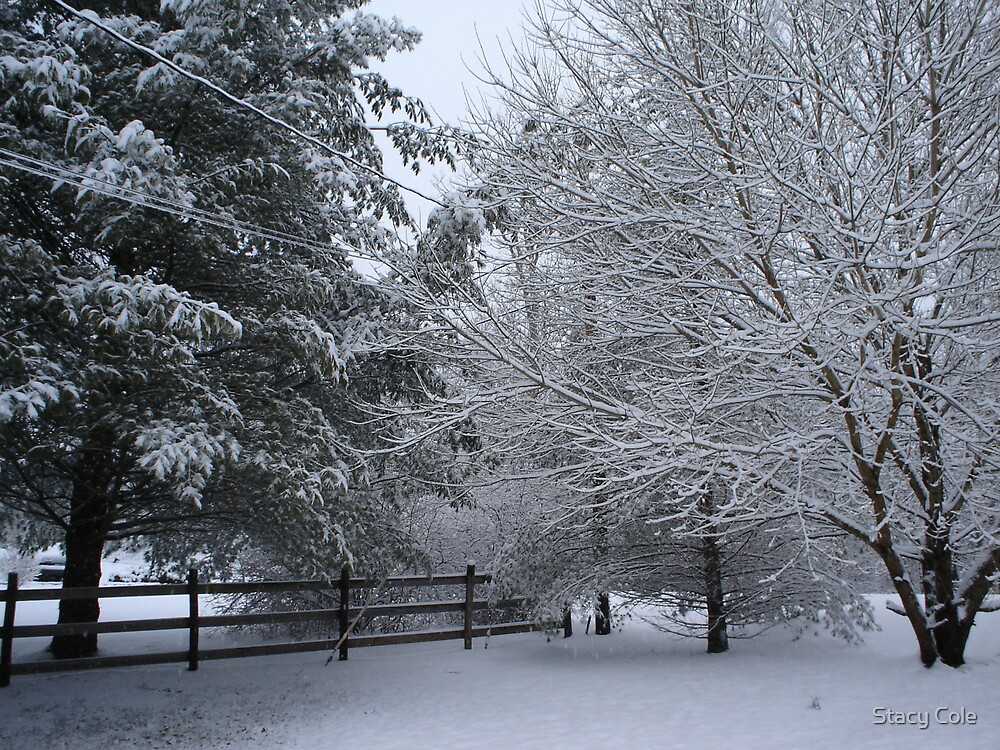 Snowy Corner by Stacy Cole