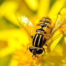 Mellow Yellow by mamba