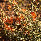 USA. Arizona. Petrified Forest National Park. Wild Flowers. by vadim19