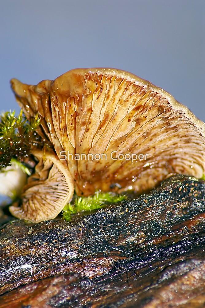 Woodland Mushroom by Shannon Beauford