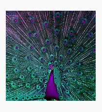 BLOOMING PEACOCK Photographic Print