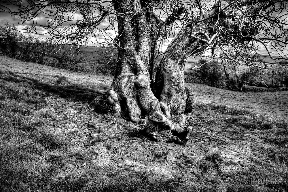 A Tree in a Pool of black and white Light by Jon Delorme