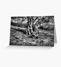 A Tree in a Pool of black and white Light Greeting Card