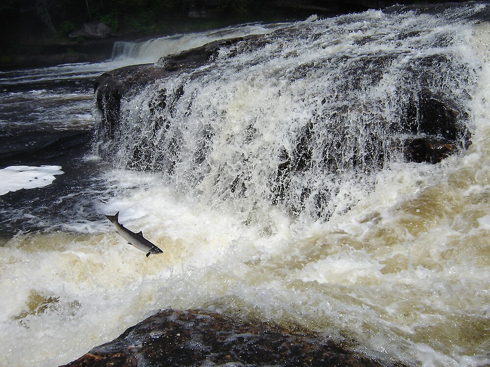 Big Falls Salmon Jump by dfoneill