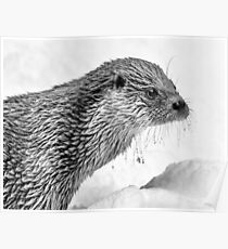 Eurasian Otter in a Snowstorm Poster