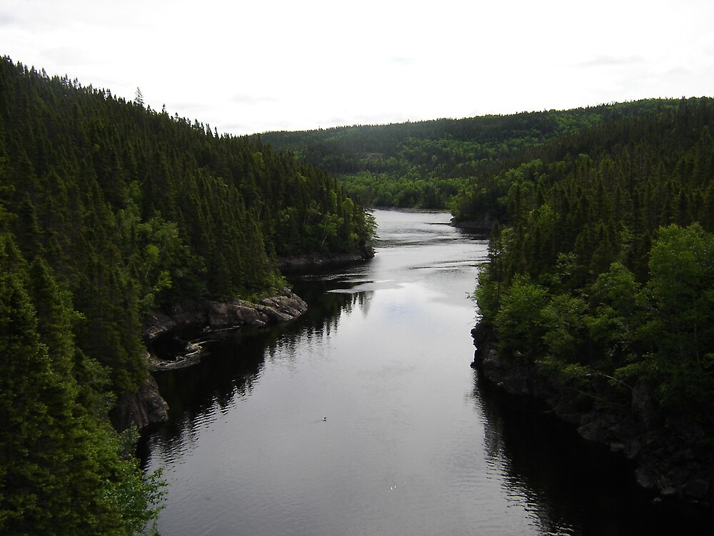 Lloyd's River Loon by dfoneill