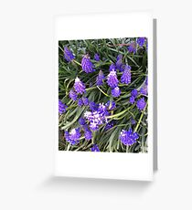 Lupin flowers Greeting Card
