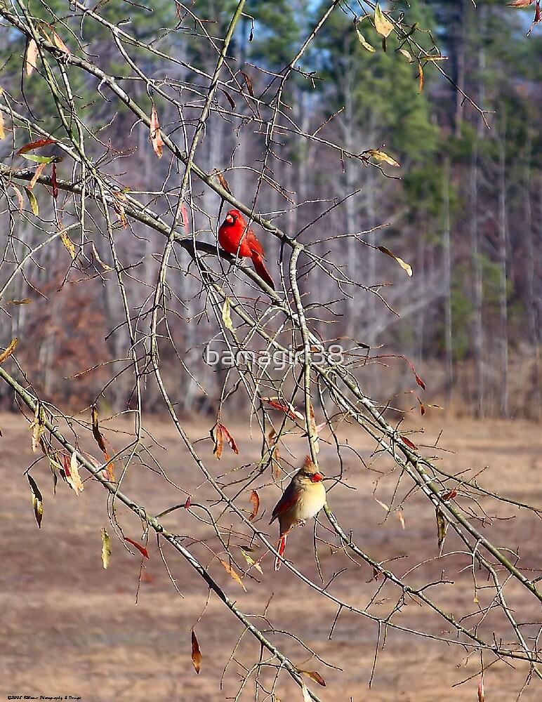 Bird Card 2 by bamagirl38