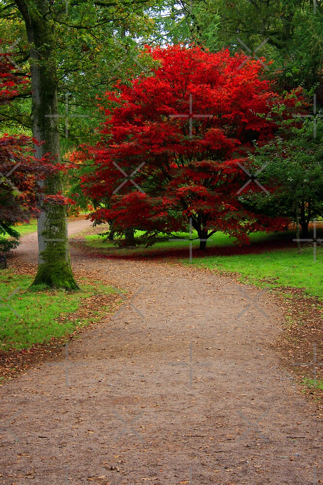 Maple Tree, Westonbirt Arboretum by Victoria Ashman