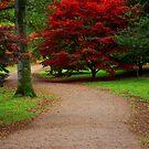Maple Tree, Westonbirt Arboretum by Victoria Ashman