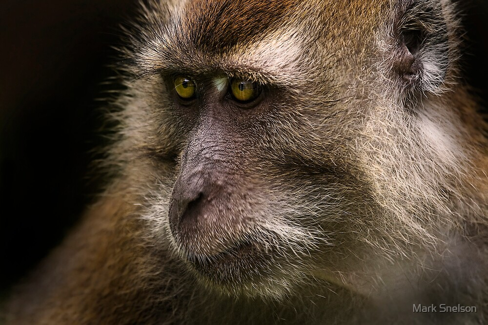 Monkey Portrait 2 by Mark Snelson