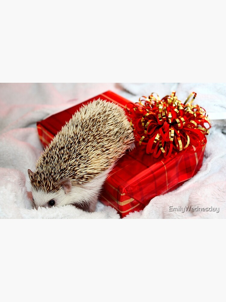 Forest the Christmas Hedgehog by EmilyWednesday