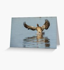 Comming into land! well water! Greeting Card