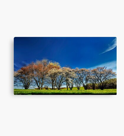 A Bright Spring Day Canvas Print