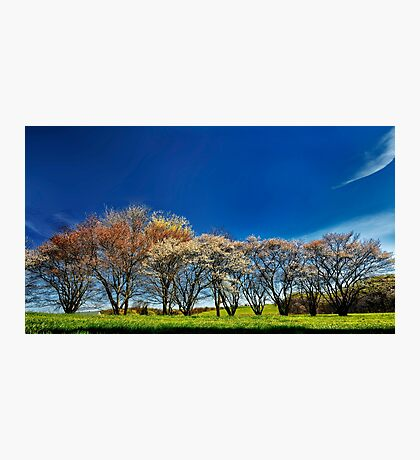 A Bright Spring Day Photographic Print