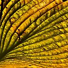 Hosta in the Fall by cclaude