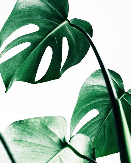 "Watercolor Green Plants Monstera Nature Posters And Prints: ""Monstera Leaves,Tropical Leaves, Green Leaves, Leaf"