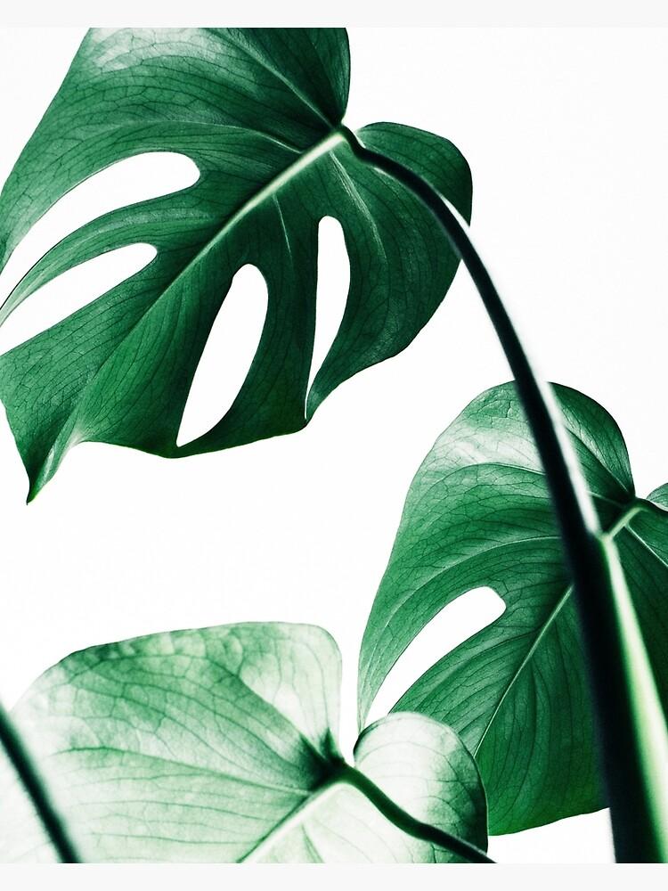 Monstera Blätter, tropische Blätter, grüne Blätter, Blatt, moderne Kunst, Wandkunst, Print, minimalistisch, modern, skandinavischen Druck von juliaemelian