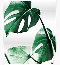 Monstera leaves,Tropical leaves, Green leaves, Leaf, Modern art, Wall art, Print, Minimalistic, Modern, Scandinavian print Poster
