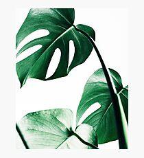 Monstera leaves,Tropical leaves, Green leaves, Leaf, Modern art, Wall art, Print, Minimalistic, Modern, Scandinavian print Photographic Print